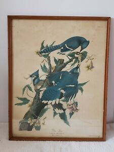 Antique Framed Audubon Victorian Bluejay Bird Hand Colored Lithograph R. Havell