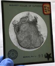 Vintage Glass Slide Scolex Of Tape Worm USA Shaw Laboratory San Francisco CA