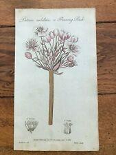 1812 elements of botany print - flowering rush !