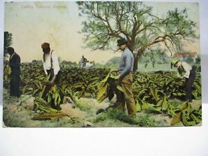 "1909 POSTCARD  "" CUTTING TOBACCO, VIRGINIA "" BLACK ? & WHITE MEN WORKING"