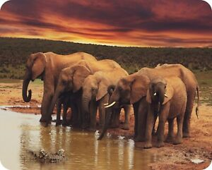 Elephant Sunset - Glass Worktop Saver / Protector - by Pearl Glass