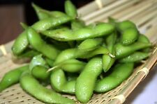 Edamame Midori Giant Certified Organic Limited 10 seeds