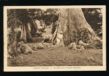 West Africa GABON Paysages d' Afrique Giant tree c1910/20s? PPC
