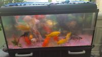 second hand fishtank 200L with fishes