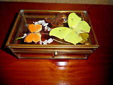 GLASS TRINKET BOX WITH PRESSED BUTTERFLIES