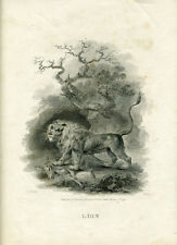 1797 Tookey Print of a Lion and Deer Published by Darton Harvey & Belch London
