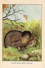 """1926 Vintage TODHUNTER BIRDS """"RUFFED GROUSE"""" 90 YEARS OLD Color Art Lithograph"""