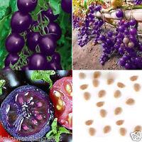 50pcs Purple Cherry Tomato Seeds Heirloom Fruit Vegetable Garden Plant