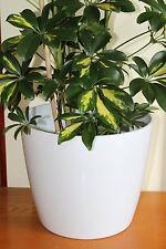 Quality Large White Rigid Plastic Plant Pot Cover-Diameter 28.5cms