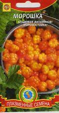 Cloudberry(Rubus chamaemorus)  Russian High Quality