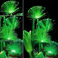 100 Pcs Rare Emerald Fluorescent Flower Seeds Garden Night Light Emitting Plants