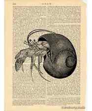 Hermit Crab Art Print on Antique Book Page Vintage Illutration