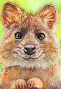 ACEO ORIGINAL Quokka  portrait  mini kangaroo Mixed Media 21-0025 s-lana
