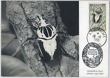 52722   - TOGO -  MAXIMUM CARD - 1955  Insects