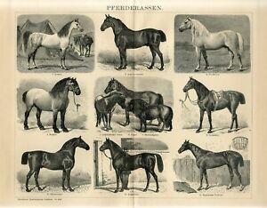 1895 HORSES HORSE BREEDS Antique Engraving Print G.Mutzel