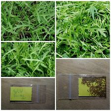 Wild Rocket Salad - Rucola ~150+ Top Quality Seeds - Extra Healthy - Spicy Taste