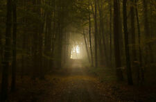Framed Print - Dark Eerie Path through an Creepy Forest (Picture Poster Gothic)