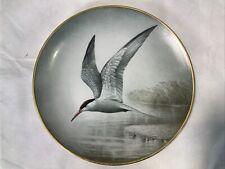 Common Tern Wild Birds Of The World Plate Wilhelm Beuhler Limoges Franklin
