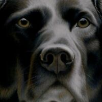 Nigel Hemming LARGER THAN LIFE Print, Labrador Gun Dogs Art Canine gift #1