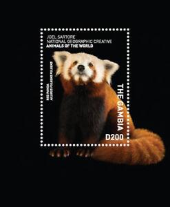 Gambia 2017 - Red Panda - Nat Geo Animals of the World - Souvenir Sheet - MNH