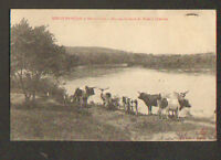 LOUDIMA (CONGO) BOVINS sur bords du NIARI , en 1909