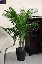 Palm in Pot Indoor Outdoor Living Room Plant Decoration Patio Garden Accessories