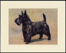 SCOTTISH TERRIER LOVELY STANDING DOG PRINT MOUNTED READY TO FRAME