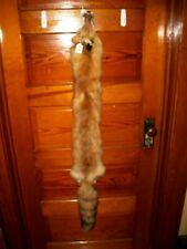 BEAUTIFUL tanned RED FOX fur pelt skin taxidermy F8 man cave ,log cabin, collar