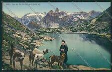 Aosta Gran San Bernardo Cane cartolina QQ5870