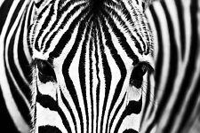 STUNNING ZEBRA PORTRAIT BLACK & WHITE CANVAS #24 QUALITY WILDLIFE ART PICTURE