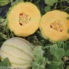 Planters Jumbo Muskmelon Cantaloupe melon Organic Heirloom 50+ seeds NON-GMO