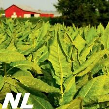 100Pcs Tobacco Seeds Fresh Growing Leaf Organic Natural Plant Garden Smoking