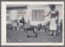Vintage Snapshot Photo Woman w/ Pet Boxer Dog on Leash 716942