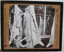 DRESSING BEEF in CHICAGO Glass Lantern Slide Hanging Meat Carcasses Keystone 141