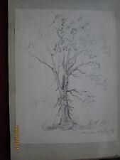 Dessin .Etude d'arbre ; signé L.CH ???Meudon ???le 18 juin 1878