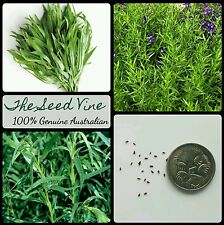 50+ RUSSIAN TARRAGON SEEDS (Artemisia dracunculus) Repell Insects Medicinal Herb