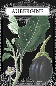 "Eggplant Drawing, Eggplant French, French Eggplant, Aubergine 4 x 6"" - 16 x 24"""