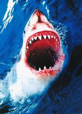 Poster:Animal: Fish & Marine : Great White Shark - Free Shipbbb #Pp 0714 Rw1 i