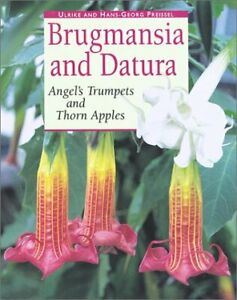 Brugmansia and Datura: Angels Trumpets and Thorn Apples