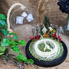 Y59c Taxidermy Oddities Curiosities Snake Skeleton Pit Viper Dome Display Decor