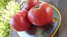 10 graines de tomate rare Cœur de Boeuf de Macédoine heirloom tomato méth.bio