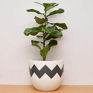 S, M, L - PLANT POT - Lightweight - Hand Painted Planter Ziggy Design