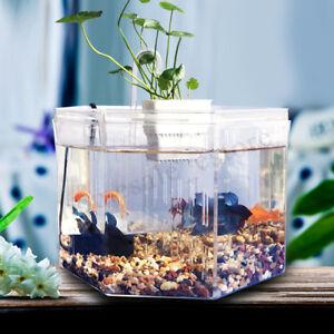 Clear Acrylic Betta Aquarium Fish Tank Breeding Isolation Box Desktop Home    .