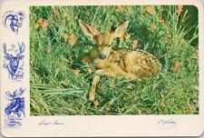Deer Fawn Gibbons Unused Vintage Postcard C2