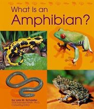What Is an Amphibian? The Animal Kingdom