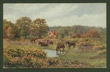 A.R.Quinton. The New Forest. near Lyndhurst. Artist Drawn Oil Effect Postcard