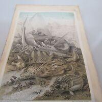 "G. HARTWIG. RARE - 1873 - COPPER ENGRAVED. ""OCEAN FISH""  ANTIQUE PRINT."