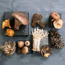 17 Types - 10mL Organic Liquid Mushroom Spores - High Potency Mycelium Extract