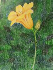colored pencil drawing flowers lily