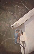 "*Postcard-""The Bluebird"" /In It's Birdhouse/ (U1-106)"